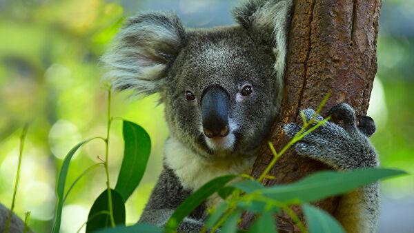 Информ — досье «Австралийские диковины»