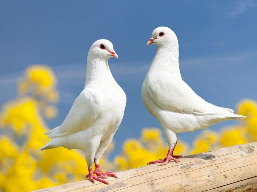 Информационный час «птичьи секреты»